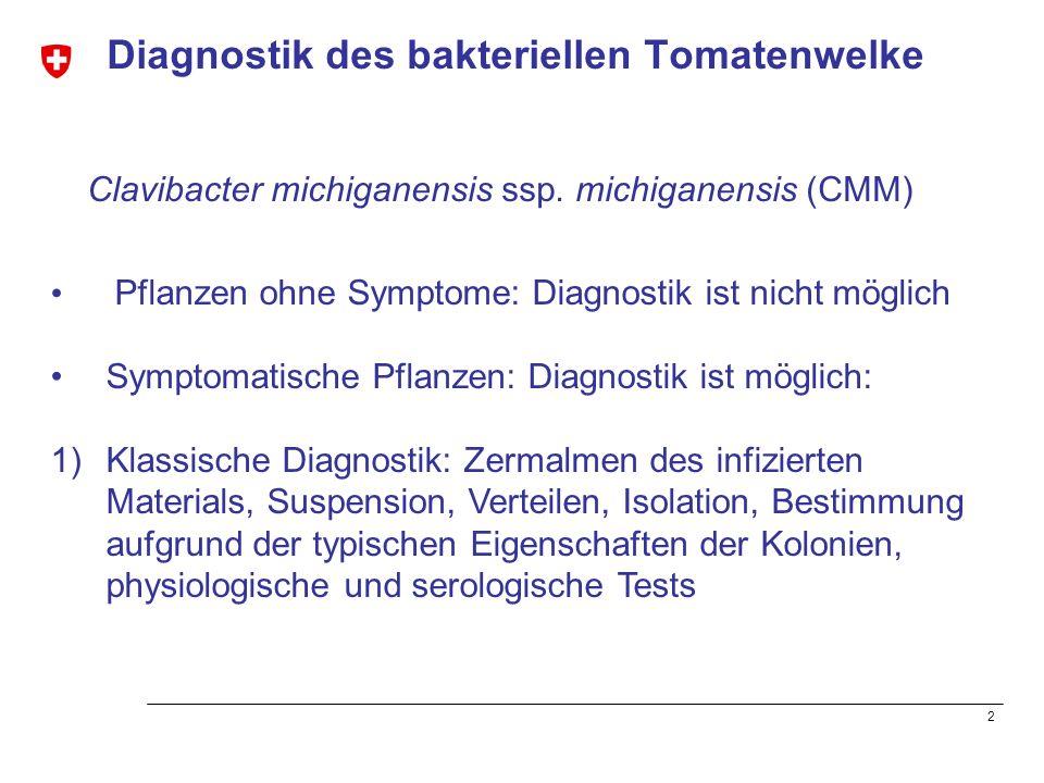2 Diagnostik des bakteriellen Tomatenwelke Pflanzen ohne Symptome: Diagnostik ist nicht möglich Symptomatische Pflanzen: Diagnostik ist möglich: 1)Kla