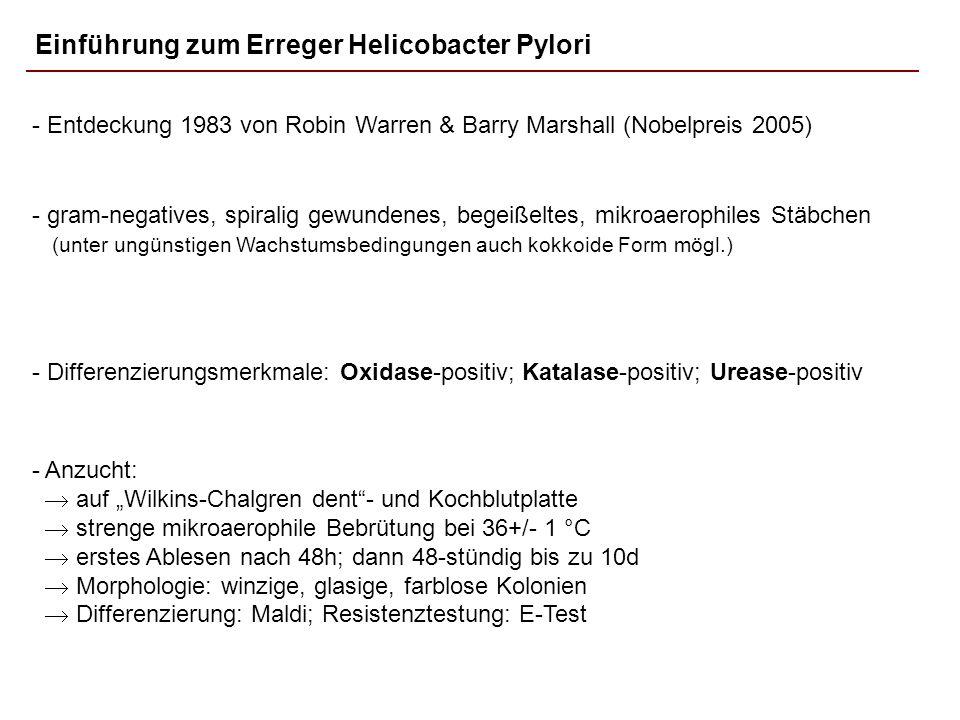 Einführung zum Erreger Helicobacter Pylori - gram-negatives, spiralig gewundenes, begeißeltes, mikroaerophiles Stäbchen (unter ungünstigen Wachstumsbe