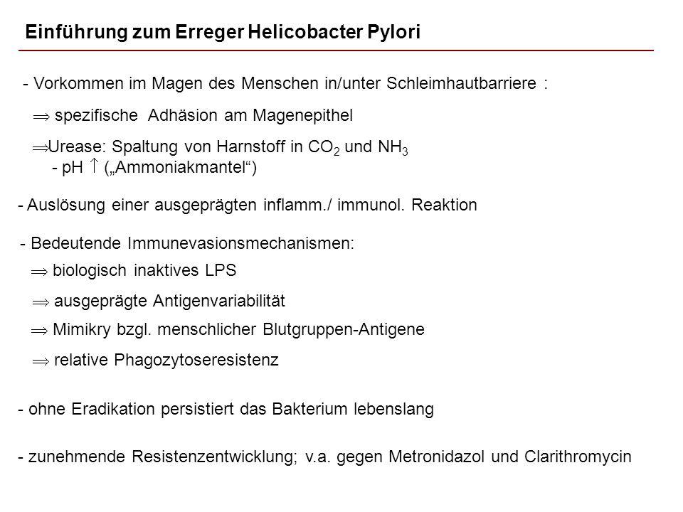 Einführung zum Erreger Helicobacter Pylori - Bedeutende Immunevasionsmechanismen: biologisch inaktives LPS ausgeprägte Antigenvariabilität Mimikry bzg