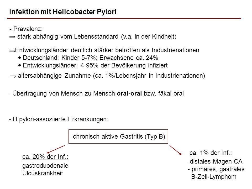 Infektion mit Helicobacter Pylori - Übertragung von Mensch zu Mensch oral-oral bzw. fäkal-oral - Prävalenz: stark abhängig vom Lebensstandard (v.a. in