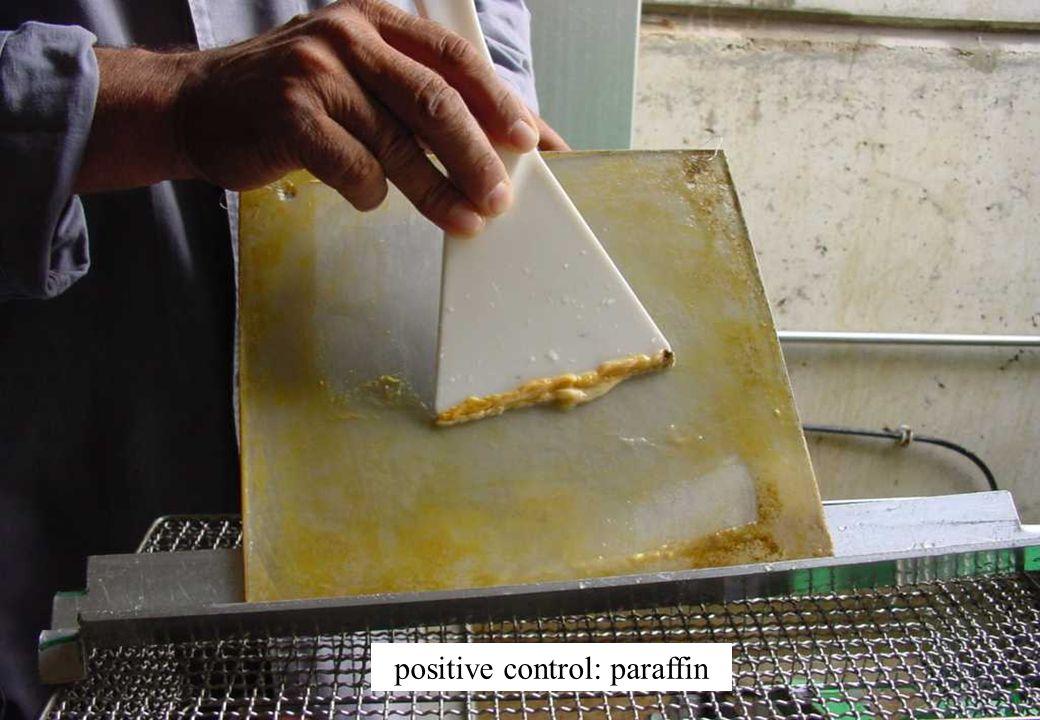 C 2009 Tuschewitzki Hygiene-Institut des Ruhrgebiets Institut für Umwelthygiene und Umweltmedizin www.hyg.de 28 positive control: paraffin
