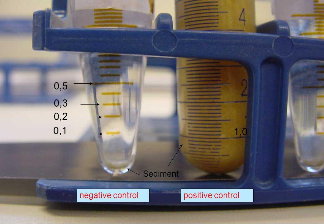C 2009 Tuschewitzki Hygiene-Institut des Ruhrgebiets Institut für Umwelthygiene und Umweltmedizin www.hyg.de 32 0,1 0,2 0,3 0,5 Sediment 1,0 negative