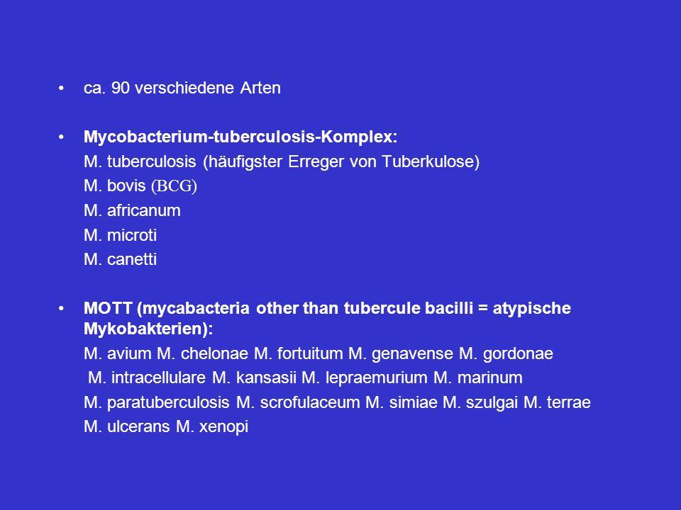 ca. 90 verschiedene Arten Mycobacterium-tuberculosis-Komplex: M. tuberculosis (häufigster Erreger von Tuberkulose) M. bovis (BCG) M. africanum M. micr