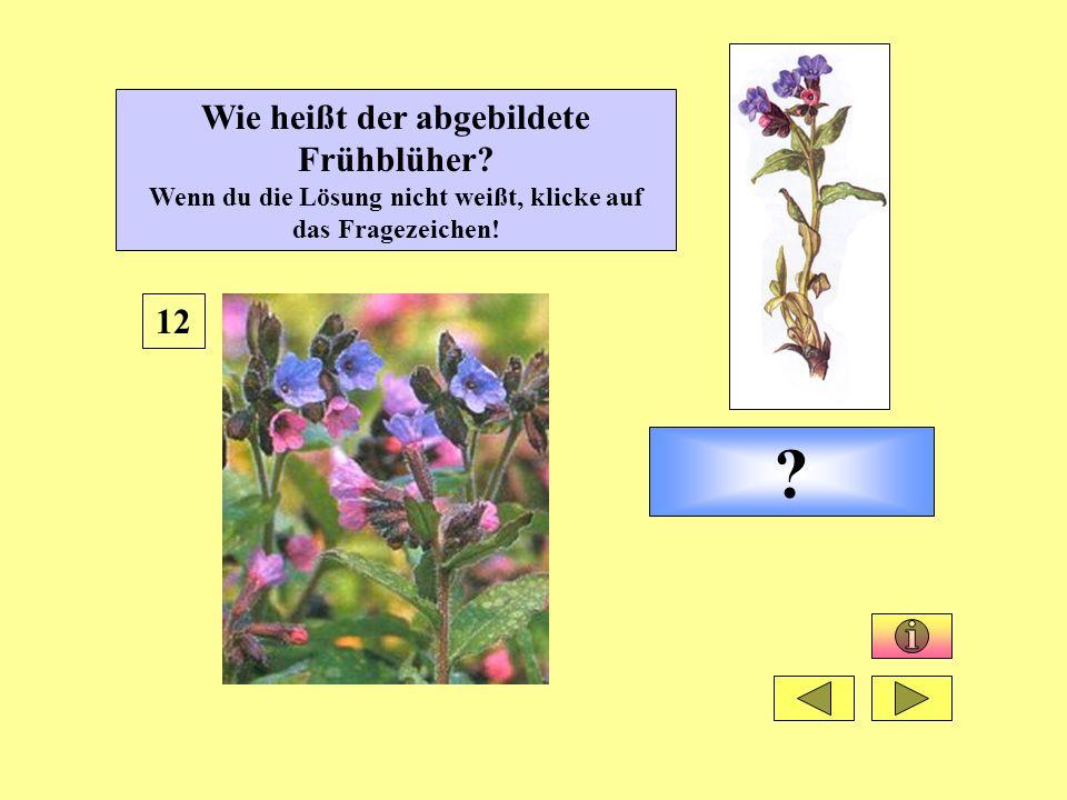 ? 12 Wie heißt der abgebildete Frühblüher? Wenn du die Lösung nicht weißt, klicke auf das Fragezeichen!
