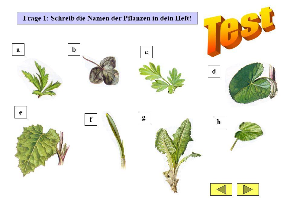 Frage 1: Schreib die Namen der Pflanzen in dein Heft! ab d c e f g h