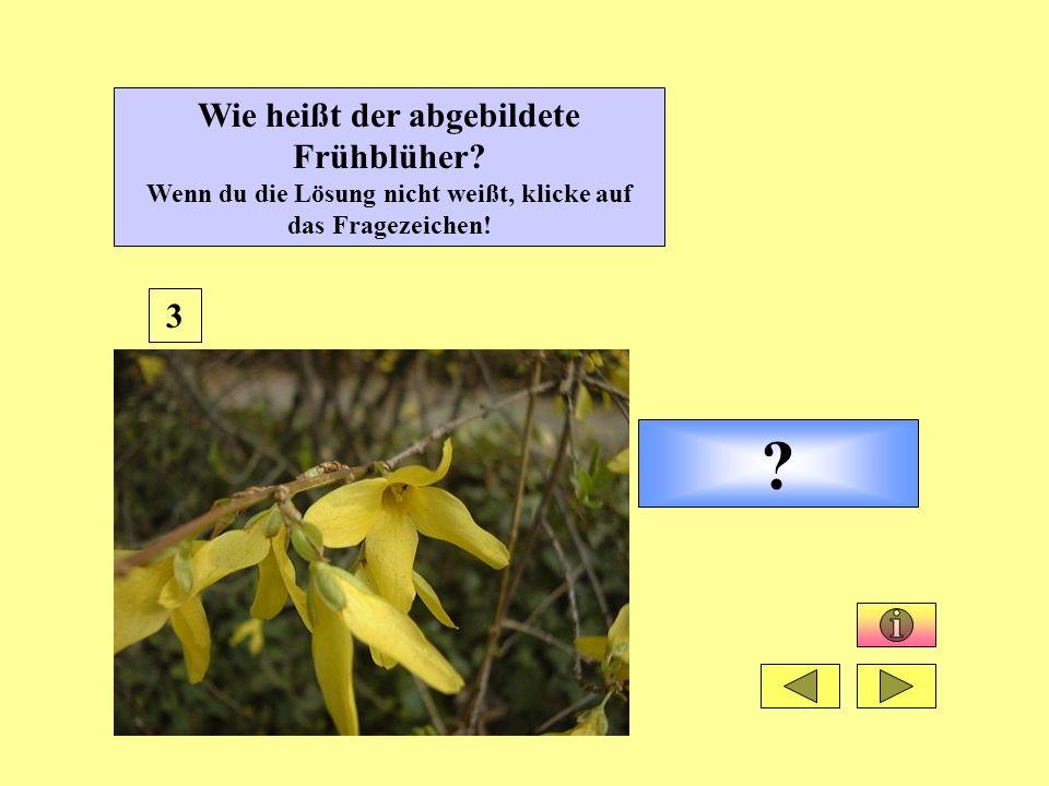 ? 3 Wie heißt der abgebildete Frühblüher? Wenn du die Lösung nicht weißt, klicke auf das Fragezeichen!