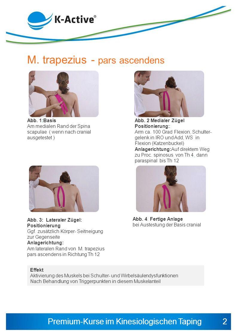 Premium-Kurse im Kinesiologischen Taping Muskelverletzung Akutversorgung Abb.