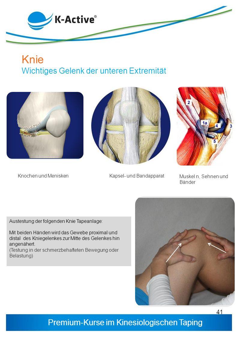 Premium-Kurse im Kinesiologischen Taping 41 Knochen und MeniskenKapsel- und Bandapparat Muskel n, Sehnen und Bänder Knie Wichtiges Gelenk der unteren