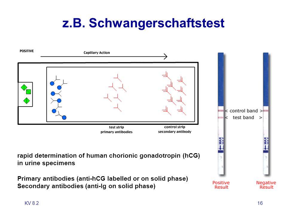KV 8.217 Allergieserologie: welcher Test.