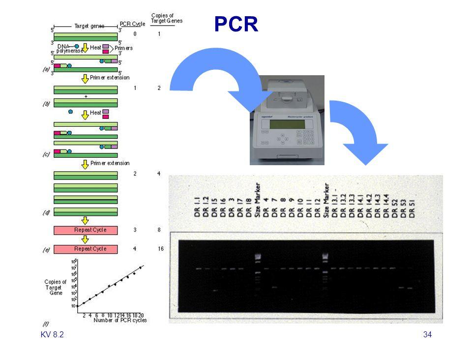 KV 8.235 HLA: Molekulare Diagnostik