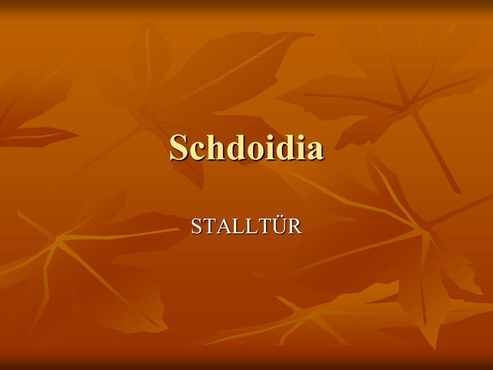 Schdoidia STALLTÜR