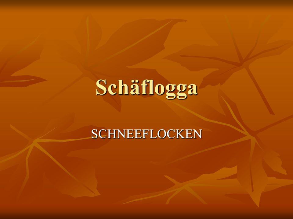 Schäflogga SCHNEEFLOCKEN