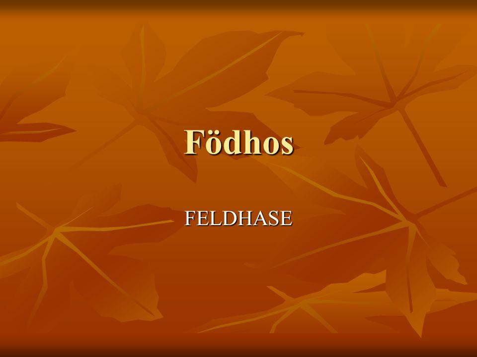 Födhos FELDHASE