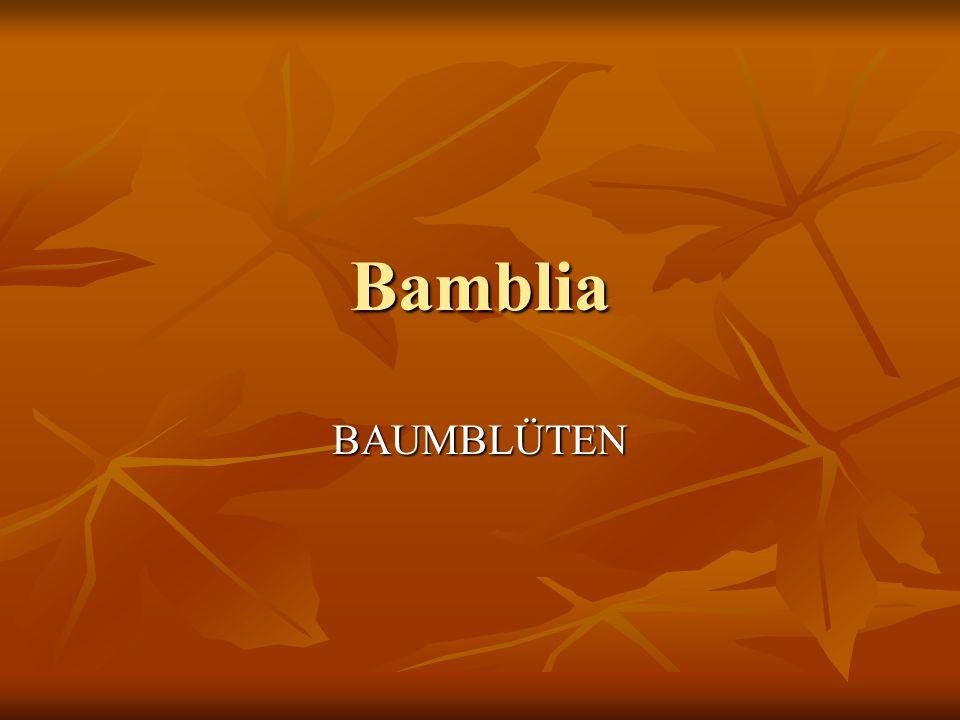 Bamblia BAUMBLÜTEN