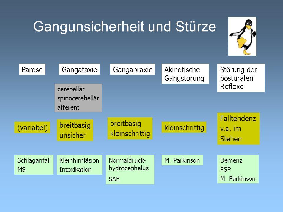 Gangunsicherheit und Stürze GangataxiePareseStörung der posturalen Reflexe GangapraxieAkinetische Gangstörung cerebellär spinocerebellär afferent brei