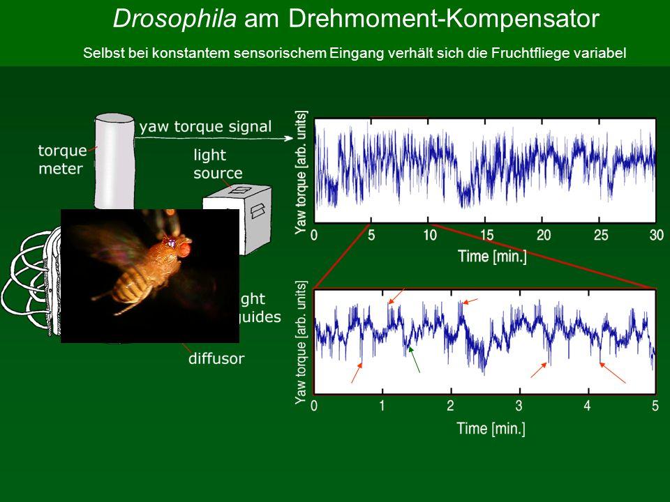 baseline spike Selbst bei konstantem sensorischem Eingang verhält sich die Fruchtfliege variabel Drosophila am Drehmoment-Kompensator