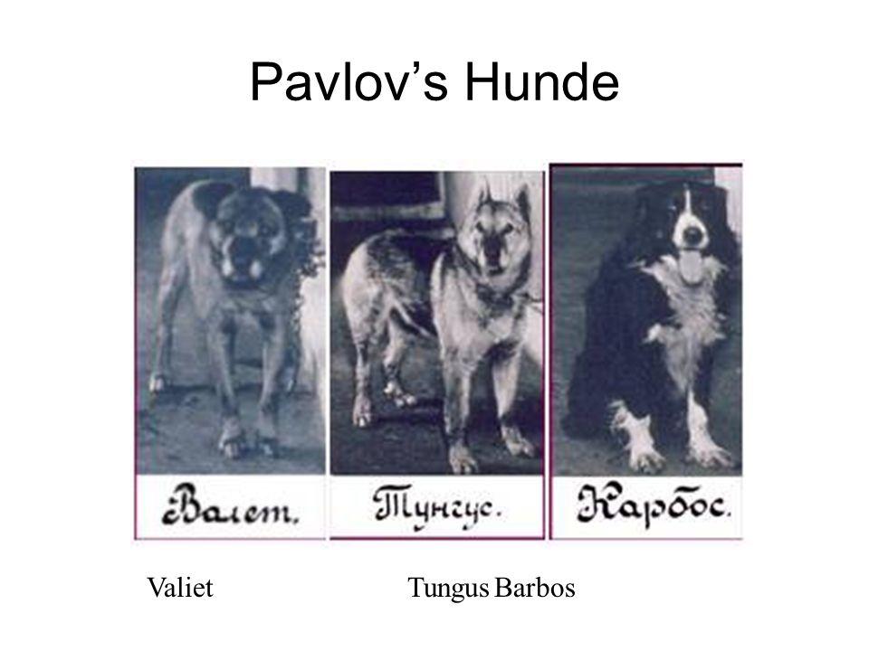 Pavlovs Hunde ValietTungusBarbos