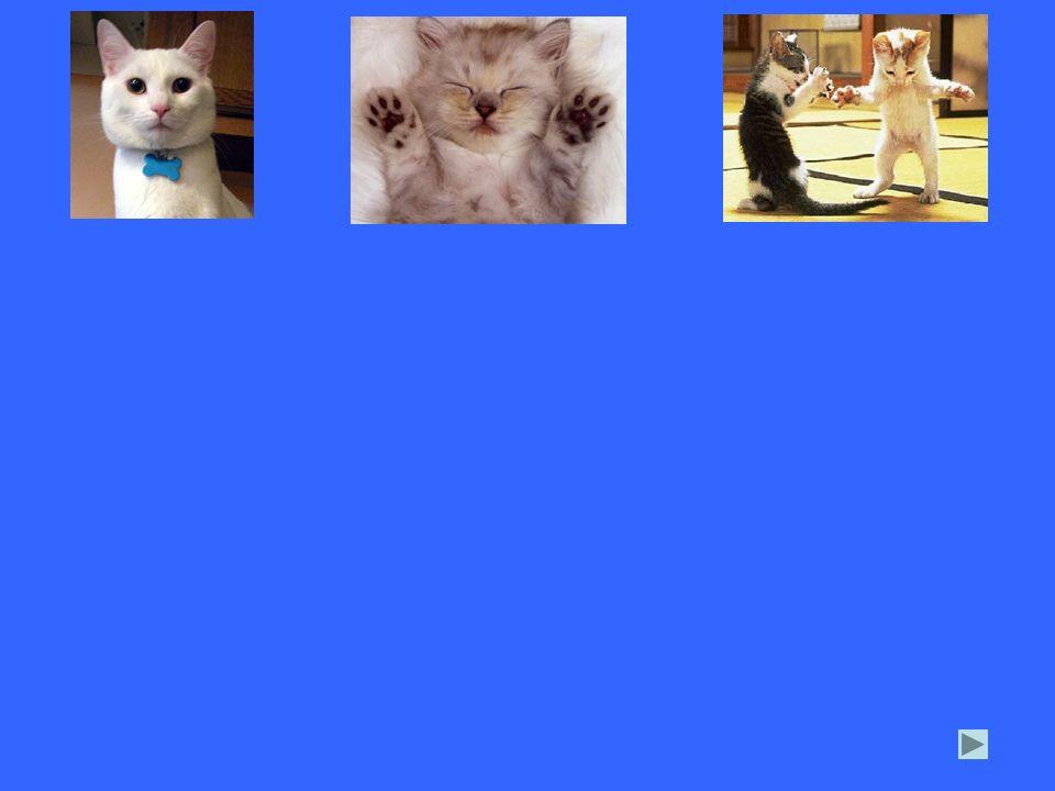 1.alle drei Bilder einfügen, Größe anpassen. 2. alle drei Bilder gleichzeitig markieren.