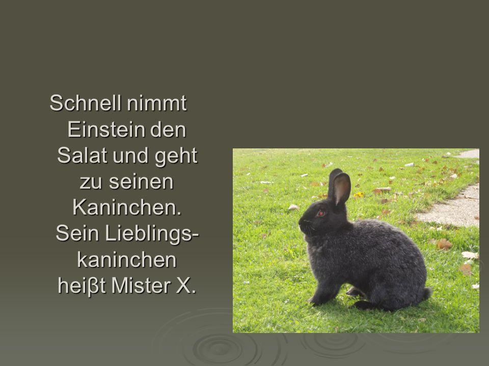 Schnell nimmt Einstein den Salat und geht zu seinen Kaninchen. Sein Lieblings- kaninchen heiβt Mister X.