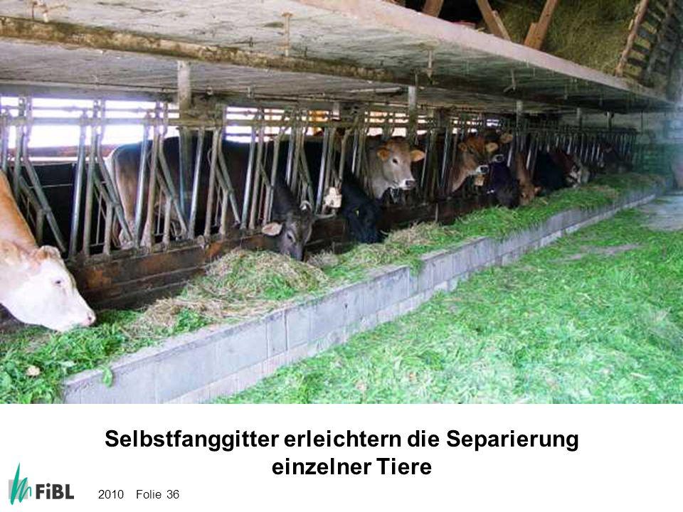 2010 Folie 36 Bild: Selbstfanggitter erleichtern die Separierung einzelner Tiere Selbstfanggitter erleichtern die Separierung einzelner Tiere