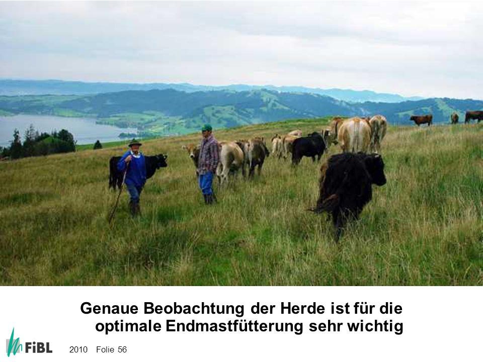 2010 Folie 56 Bild: Genaue Beobachtung der Herde ist für die optimale Endmastfütterung sehr wichtig Genaue Beobachtung der Herde ist für die optimale