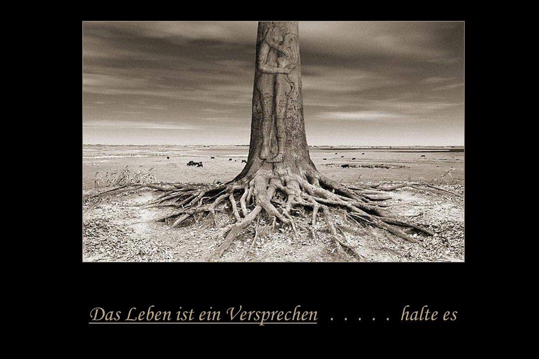 Das Leben ist eine Reise..... mache sie bis zum Ende