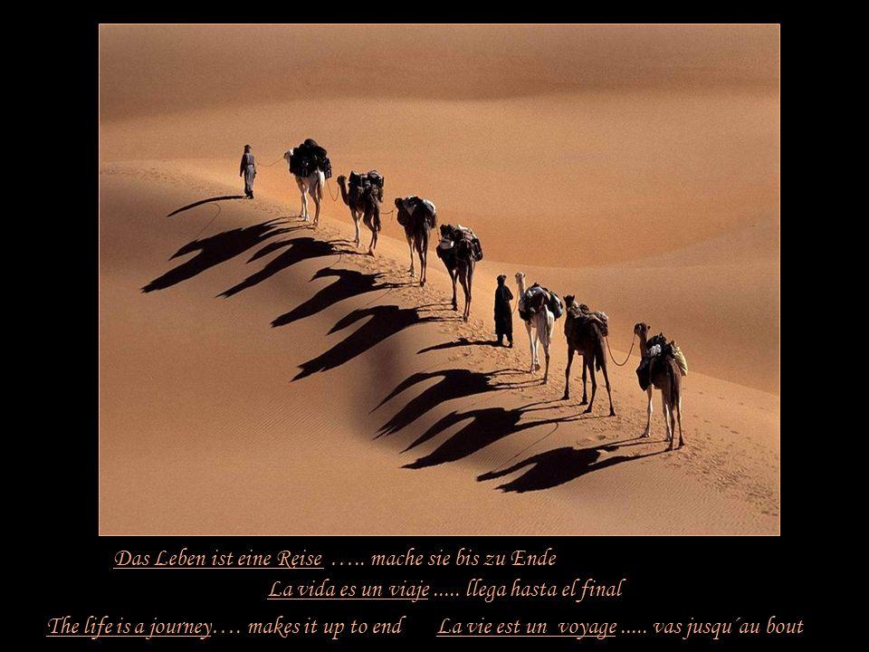 Das Leben ist eine Gelegenheit …… ergreife sie The life is an opportunity...... seizes it La vie est une chance...... saisis -la La vida es una oportu
