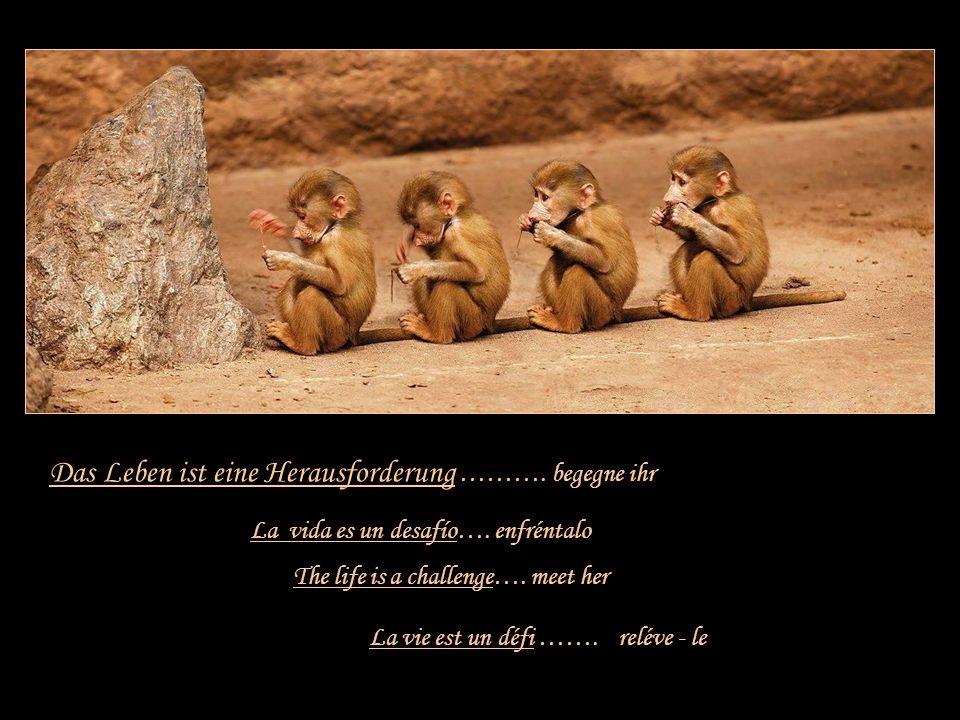 Leben ist …….. La vie est … Danke an Hans, der mir diese Zeilen zusandte!! Musik: Bette Midler ~ From a distance Life is …. La vida es …