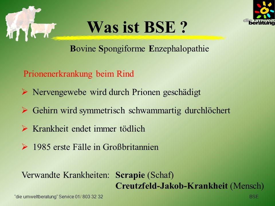 BSEdie umweltberatung Service 01/ 803 32 32 Was ist BSE ? Bovine Spongiforme Enzephalopathie Prionenerkrankung beim Rind Nervengewebe wird durch Prion