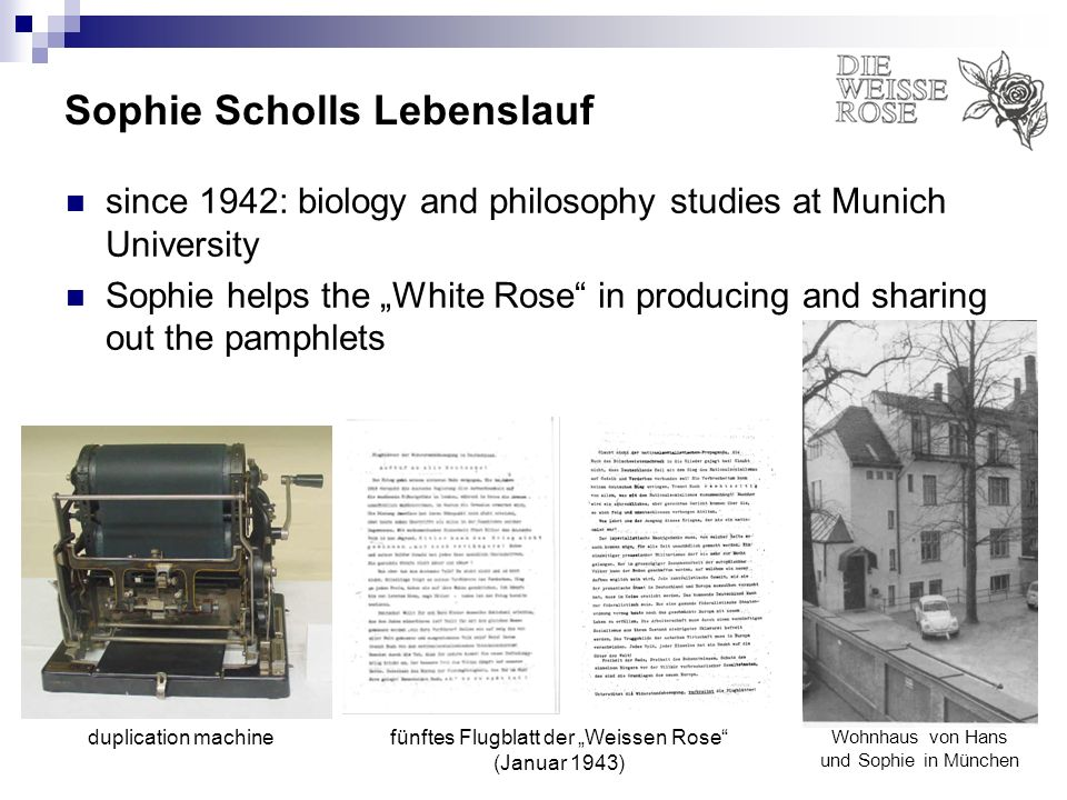 Sophie Scholls Lebenslauf since 1942: biology and philosophy studies at Munich University Sophie helps the White Rose in producing and sharing out the