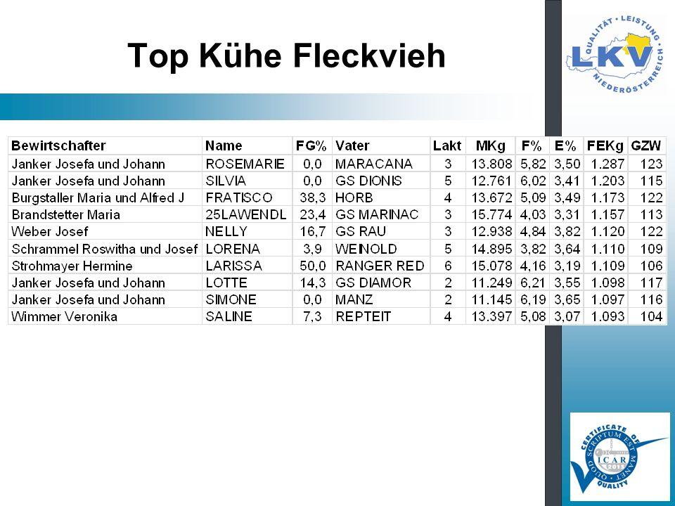 Top Kühe Fleckvieh