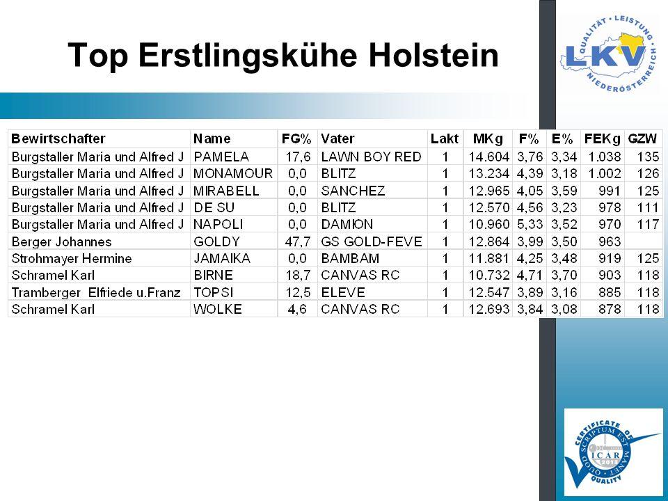 Top Erstlingskühe Holstein