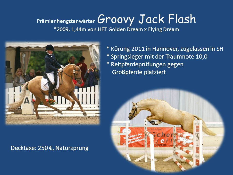 Prämienhengstanwärter Groovy Jack Flash *2009, 1,44m von HET Golden Dream x Flying Dream * Körung 2011 in Hannover, zugelassen in SH * Springsieger mi