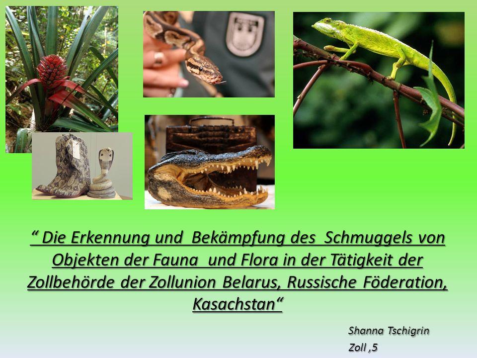Die Erkennung und Bekämpfung des Schmuggels von Objekten der Fauna und Flora in der Tätigkeit der Zollbehörde der Zollunion Belarus, Russische Föderat