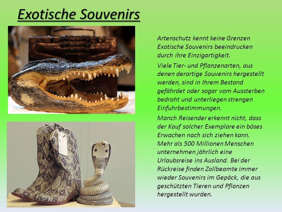 Exotische Souvenirs Artenschutz kennt keine Grenzen Exotische Souvenirs beeindrucken durch ihre Einzigartigkeit. Viele Tier- und Pflanzenarten, aus de