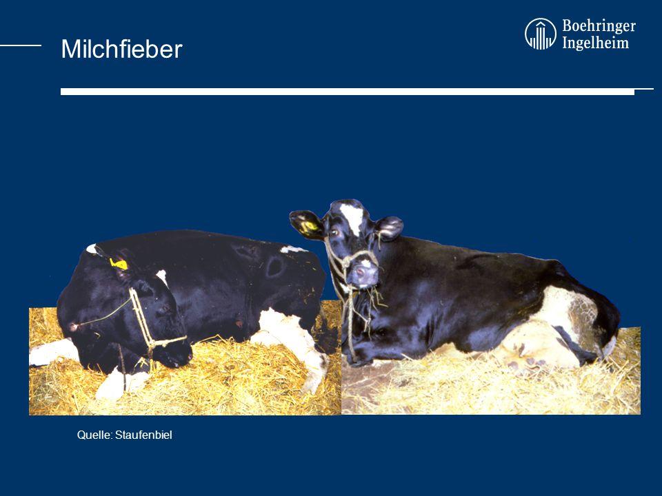 Milchfieber Quelle: Staufenbiel