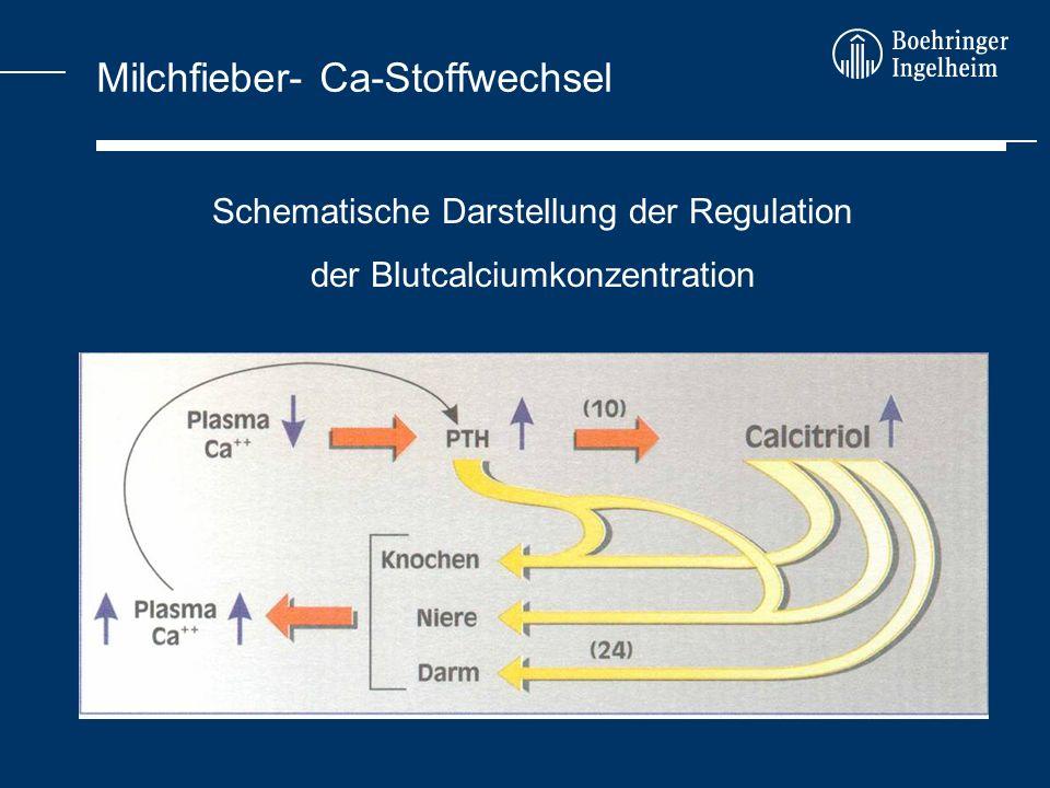 Milchfieber- Ca-Stoffwechsel Schematische Darstellung der Regulation der Blutcalciumkonzentration