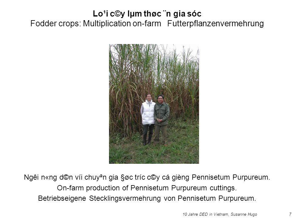 10 Jahre DED in Vietnam, Susanne Hugo7 Lo¹i c©y lµm thøc ¨n gia sóc Fodder crops: Multiplication on-farm Futterpflanzenvermehrung Ngêi n«ng d©n víi chuyªn gia §øc tríc c©y cá gièng Pennisetum Purpureum.
