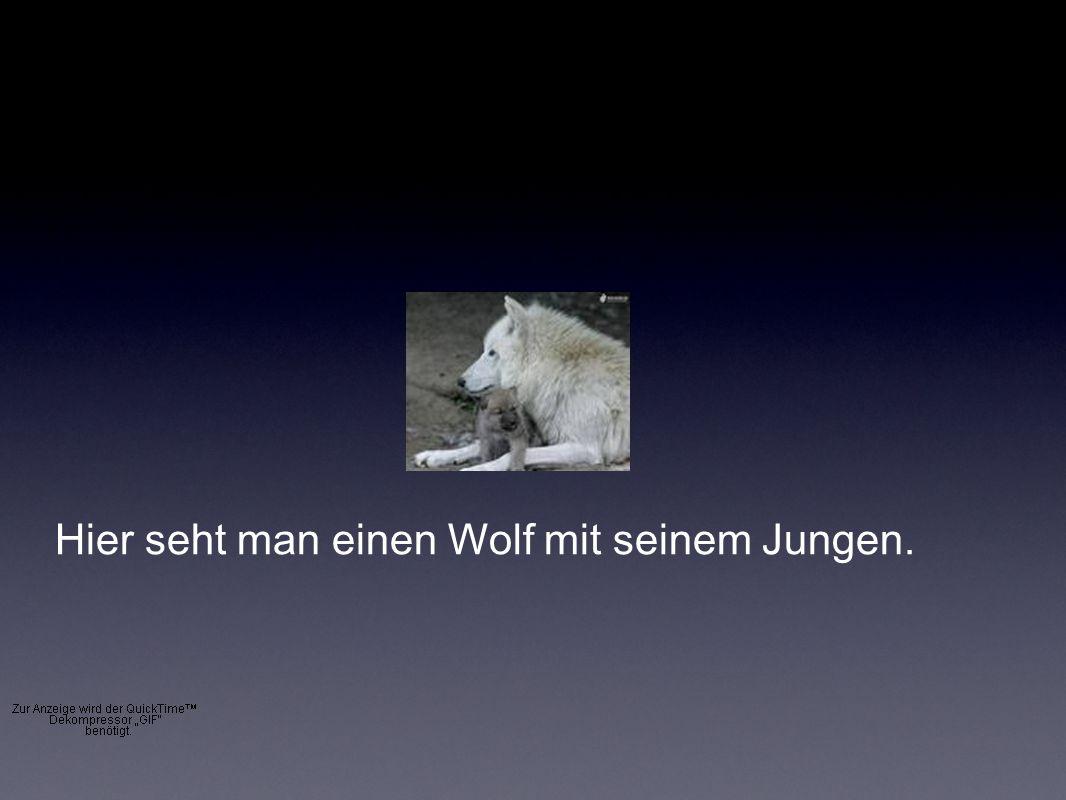 Hier seht man einen Wolf mit seinem Jungen.