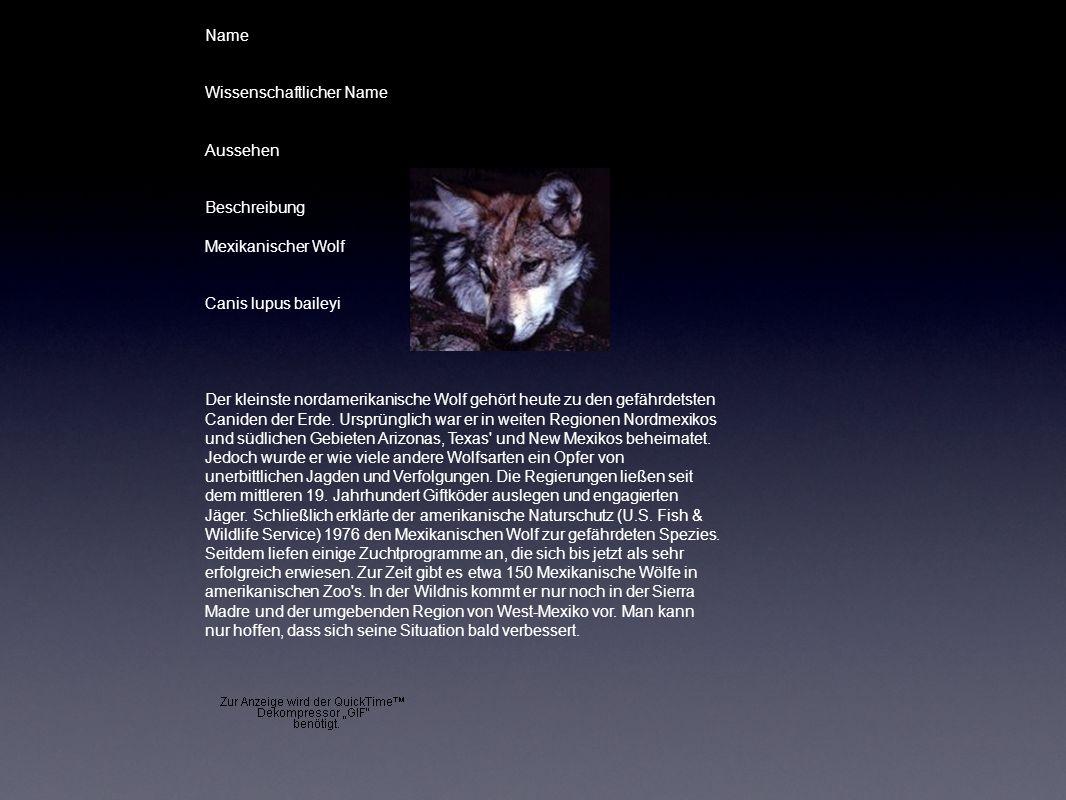 Name Wissenschaftlicher Name Aussehen Beschreibung Mexikanischer Wolf Canis lupus baileyi Der kleinste nordamerikanische Wolf gehört heute zu den gefä