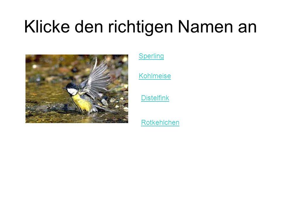 Klicke den richtigen Namen an Sperling Kohlmeise Distelfink Rotkehlchen