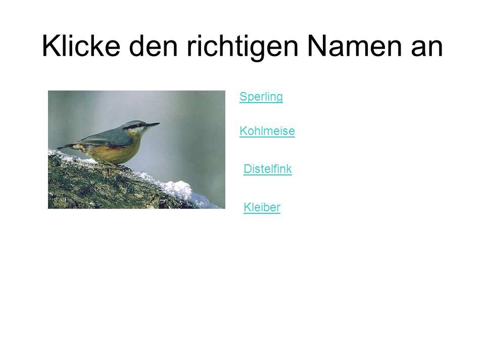 Klicke den richtigen Namen an Sperling Kohlmeise Distelfink Kleiber