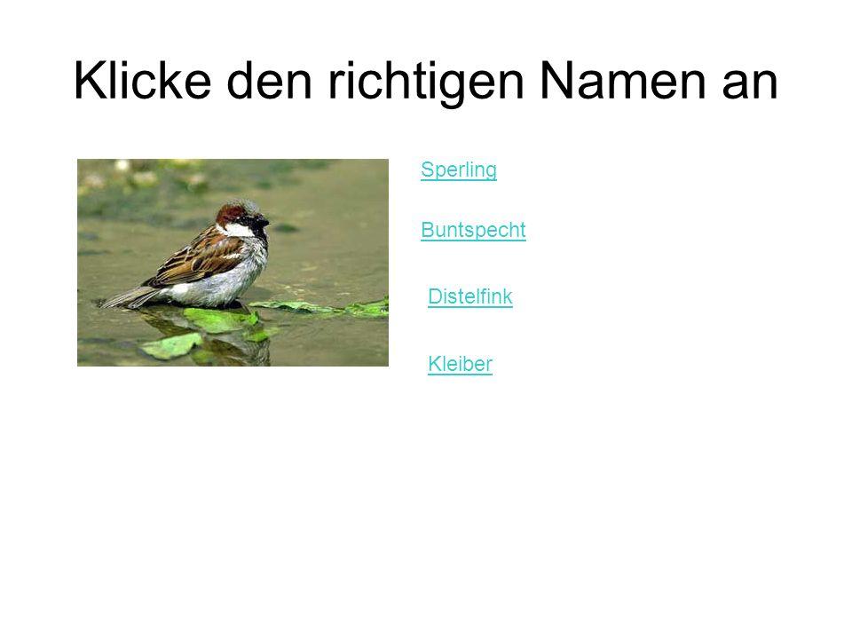 Klicke den richtigen Namen an Sperling Buntspecht Distelfink Kleiber