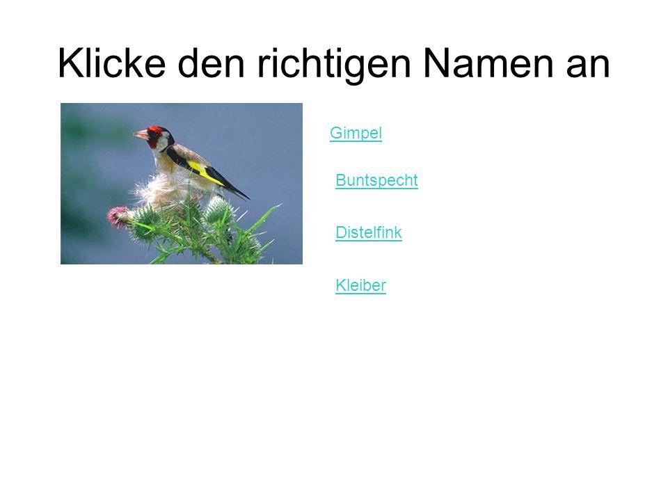 Klicke den richtigen Namen an Gimpel Buntspecht Distelfink Kleiber