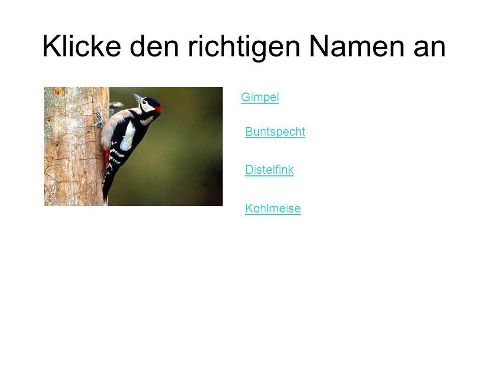 Klicke den richtigen Namen an Gimpel Buntspecht Distelfink Kohlmeise