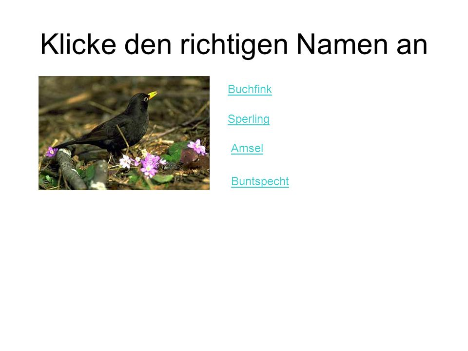 Klicke den richtigen Namen an Buchfink Sperling Amsel Buntspecht