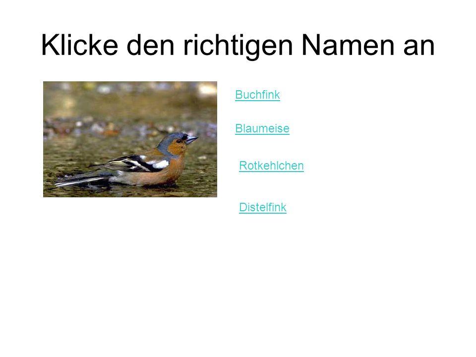 Klicke den richtigen Namen an Buchfink Blaumeise Rotkehlchen Distelfink