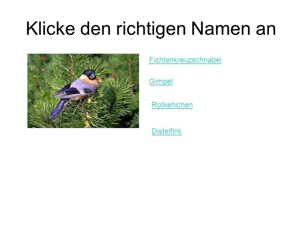 Klicke den richtigen Namen an Fichtenkreuzschnabel Gimpel Rotkehlchen Distelfink