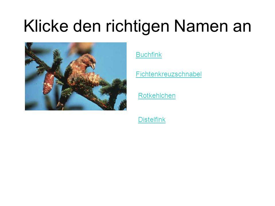 Klicke den richtigen Namen an Buchfink Fichtenkreuzschnabel Rotkehlchen Distelfink