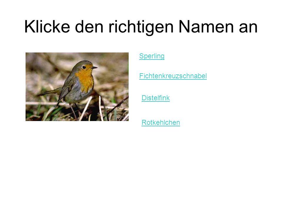 Klicke den richtigen Namen an Sperling Fichtenkreuzschnabel Distelfink Rotkehlchen
